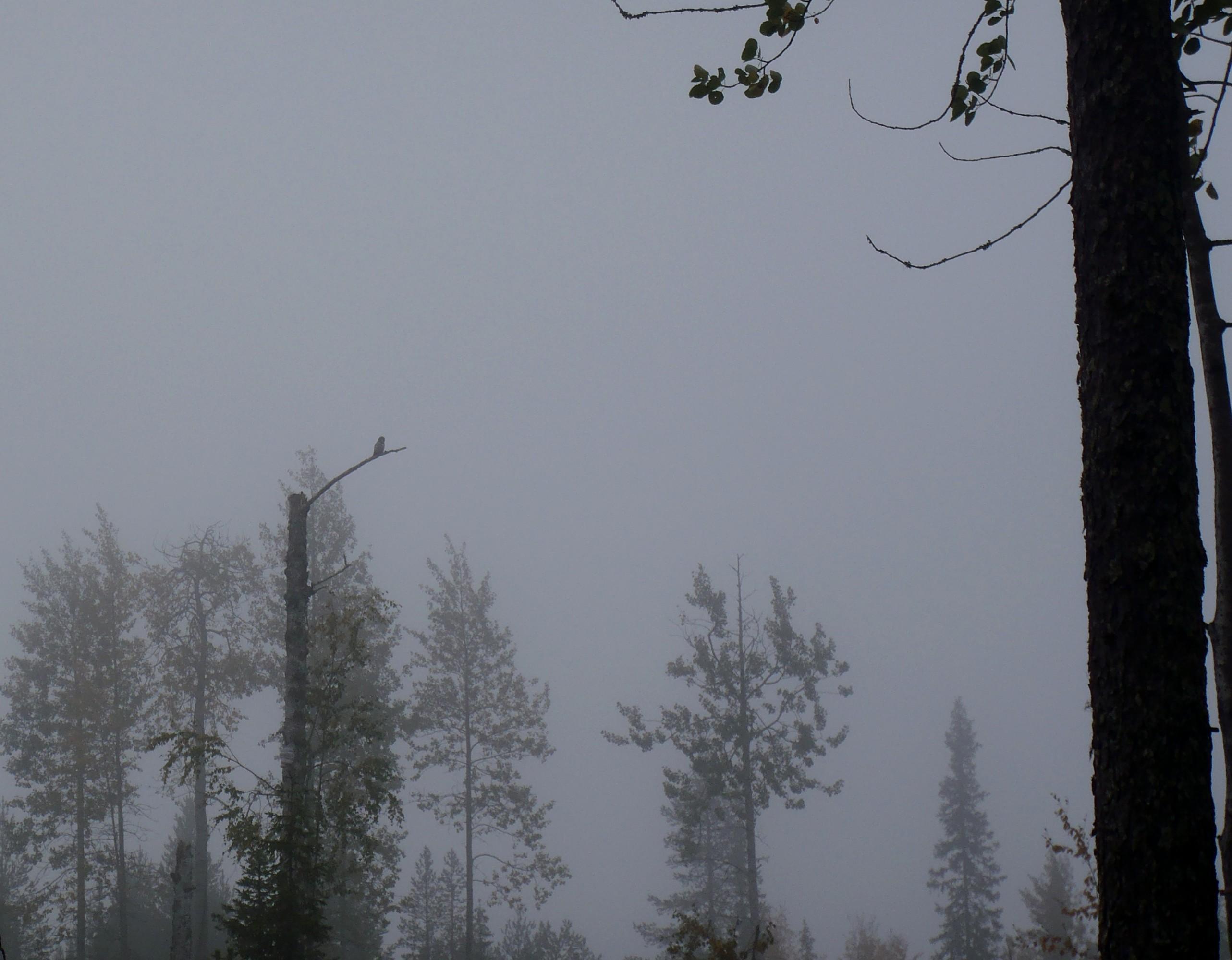 Loppusyksy, iso pöllö tarkkaile inventoijia - pimeys luo kafkamaisen tunnelman